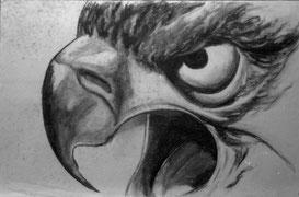 vogelkop 1985