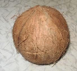 Кашпо из кокоса.Кашпо из кокоса.Бонсай, миниатюра, комнатные растения, кукольный домик, цветы. флора арт, прудик, мостик,