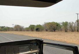 Elefant an der Strasse