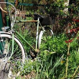 Rad im Garten