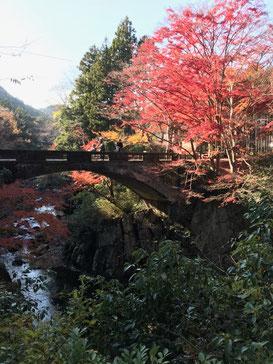 近くで見つけた秋(河内渓谷)