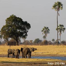 Campingsafari in Zimbabwe - Elefanten