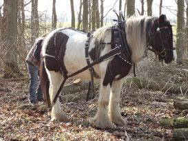 Holzrücken mit Pferden