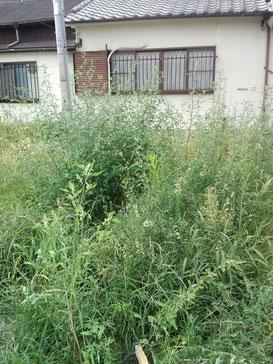 2014年の夏。それでも生い茂る草。