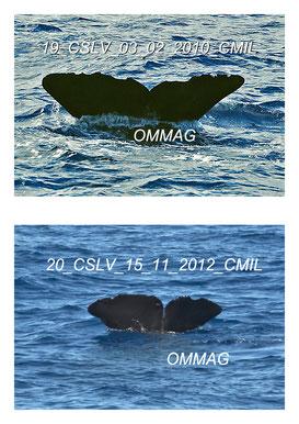 observation baleine guadeloupe