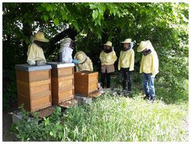 Bienenworkshop,