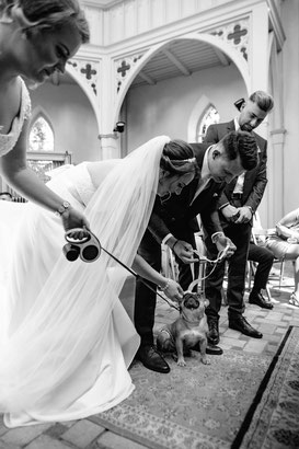 Hund als Ringträger bei der Hochzeit