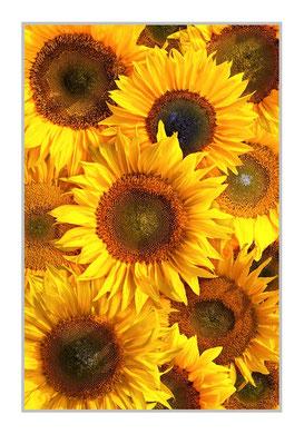 """Bildheizung """"Sonnenblumen"""" 450 Watt, 60x90cm, hier mit Rahmen silber matt, zum Vergrößern anklicken!"""