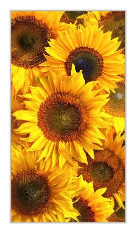 """Bildheizung Sonnenblumen"""" 700 Watt, 60x110cm, hier mit Rahmen silber matt, zum Vergrößern anklicken!"""