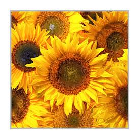 """Bildheizung """"Sonnenblumen"""" 300 Watt, 60x60cm, hier mit Alurahmen silber matt, zum Vergrößern anklicken!"""