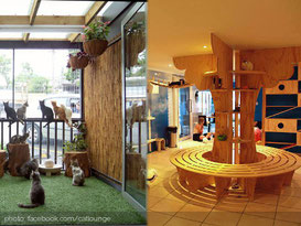 the-cat-lounge-aukland