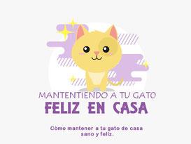 gato-interior-feliz-sano-infografia