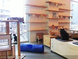 cat-fe-vancouver