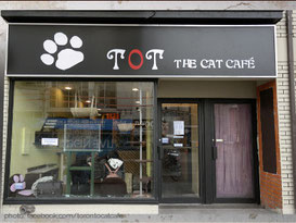 tot-the-cat-cafe-toronto