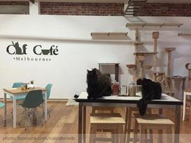Pee Pee's Katzencafé