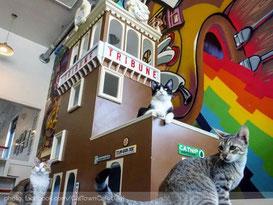 cat-town-oakloand