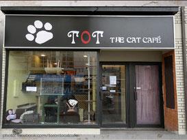 tot-the-cat-cafe-toronto