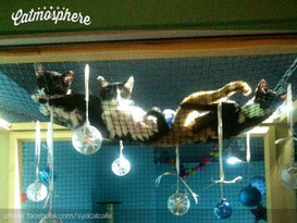catmosphere-sydney-space-cat-cafe