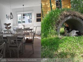 baristacats-katzencafe-berlin
