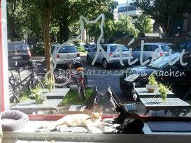 milou-katzencafe-aachen