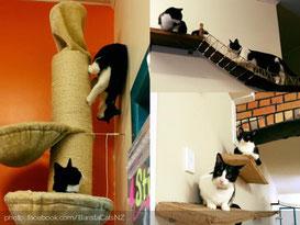 barista-cats-cafe-aukland