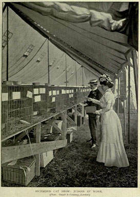the-book-of-the-cat-1904-judges-richmond-cat-show