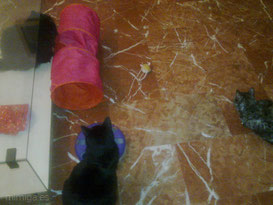 juguete-raton-teledirigido-micro-mouse-zooplus-probadoras-miga-india-lorenza
