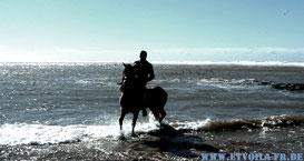 Reiten am Atlantik in Essaouira - Jimi liebt das Meer! Erholung + Französisch-Sprachkurs mit ET.Voilà Sprachferien in Marokko