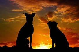 deux chiens assis de dos côte à côte regarde un couché de soleil orange par coach canin 16 en charente