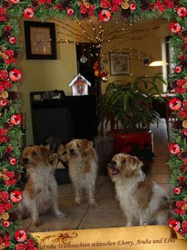 Mama Ebony, Aruba und Elba wünschen frohe Weihnachten