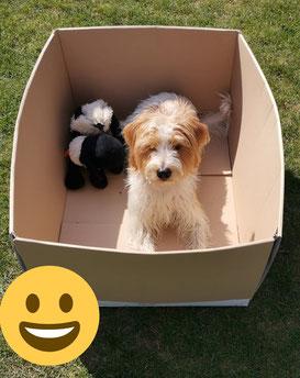 Kortez in der Kiste :-)