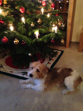 Gianni wünscht frohe Weihnachten
