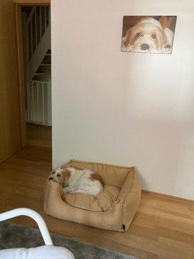Bürohund Eddie (Eduardo)