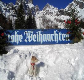 Helena wünscht frohe Weihnachten