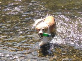 Benita genießt das Wasser bei der Sommerhitze