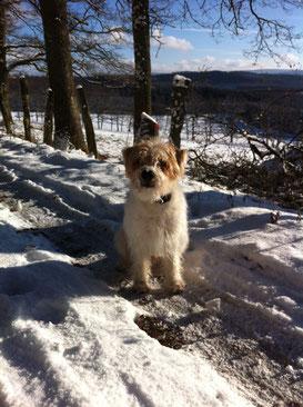 Wintergruß von Enno