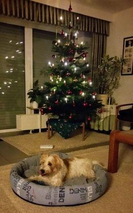 Ambo sendet Weihnachtsgrüße
