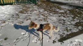Chipo im Schnee