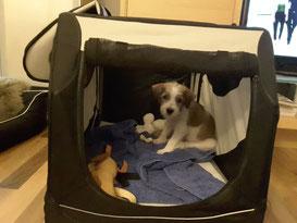 Chipo im neuen Heim