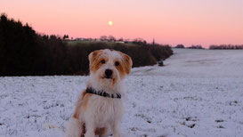 Eduardo im Schnee