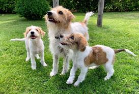 Bob mit Mama Kira und Schwester Bajule