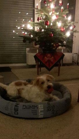 Ambo wünscht frohe Weihnachten