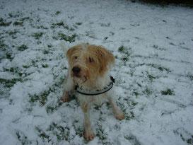 Domingo im Schnee