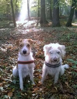 Hombre und Christo