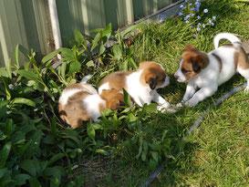schon fleißig bei der Gartenarbeit