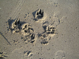 viele Spuren im Sand