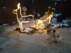 Weihnachtsgrüße von Helena
