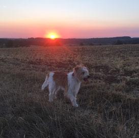 Cora genießt den Sonnenuntergang