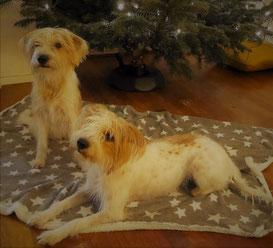 Gamba und Tochter Aria wünschen frohe Weihnachten