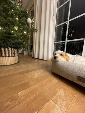 Weihnachtsgrüße von Eduardo